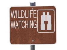 wildlife watching, wildlife viewing, eco-tourism